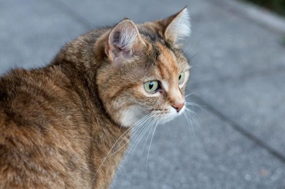 Katze_I
