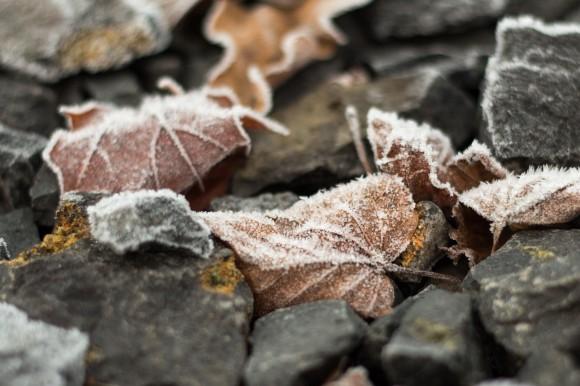 Winter14_1